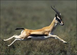 gazelle-image-01